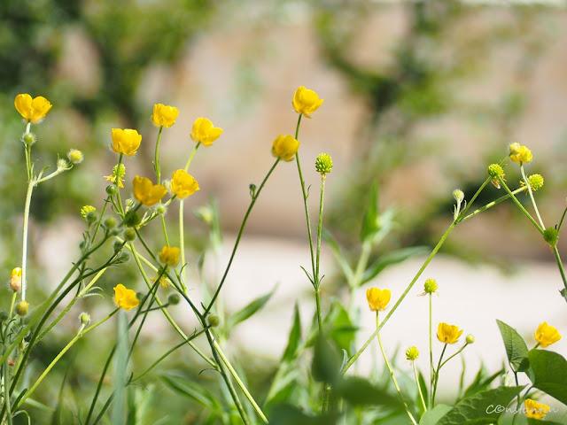 Bokeh - florile din prim-plan sunt clare, fundalul este blur-at - blog Foto-Ideea