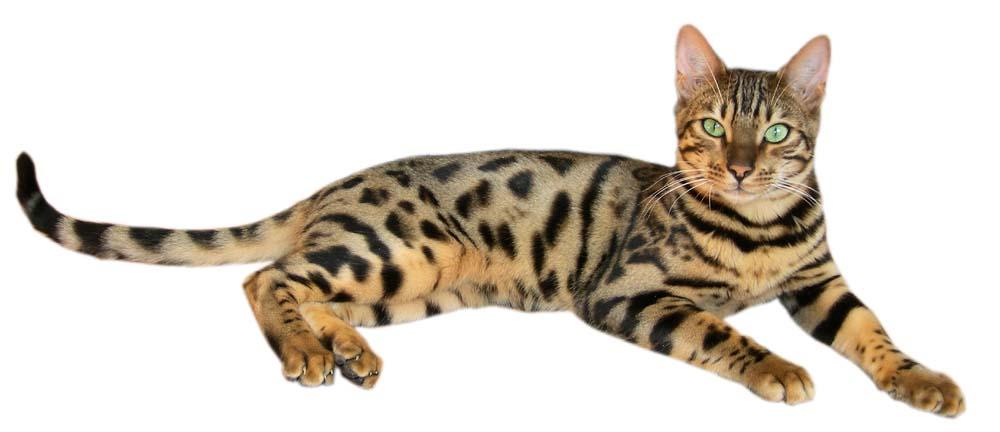 DetailsRare Domestic Cats