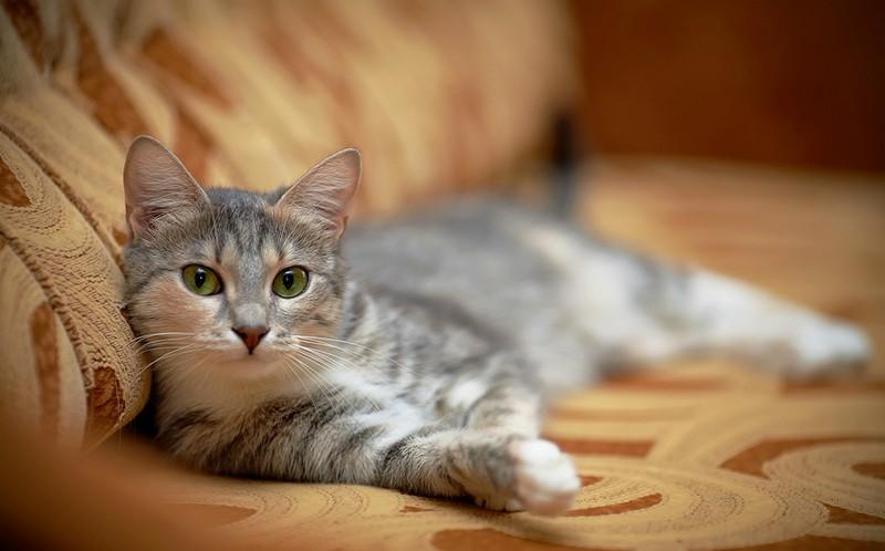 Το κοινό διακοσμητικό αντικείμενο που μπορεί να σκοτώσει μια γάτα