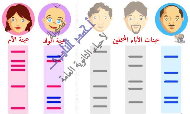 البصمة الوراثية - مدونة أحمد النادى لأحياء الثانوية العامة