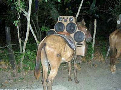 Lustige Pferde Bilder Pimp mein Pferd - Hip Hop Islamischer Staat Krieger
