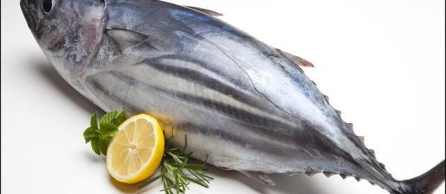 Gambar Ikan Tuna Terbesar dan Termahal Hasil tangkap Indonesia