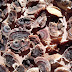 Fungimania: Plastikersatz der Zukunft?
