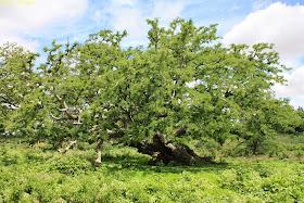 Nallur Tamarind Grove