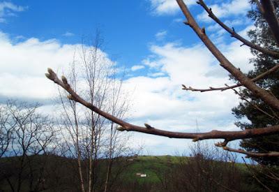 Manzano con sus ramas desnudas