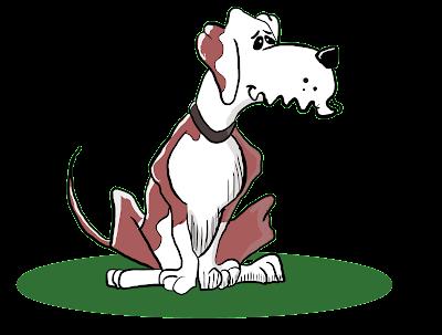 Tipos de coleira guia para cachorro