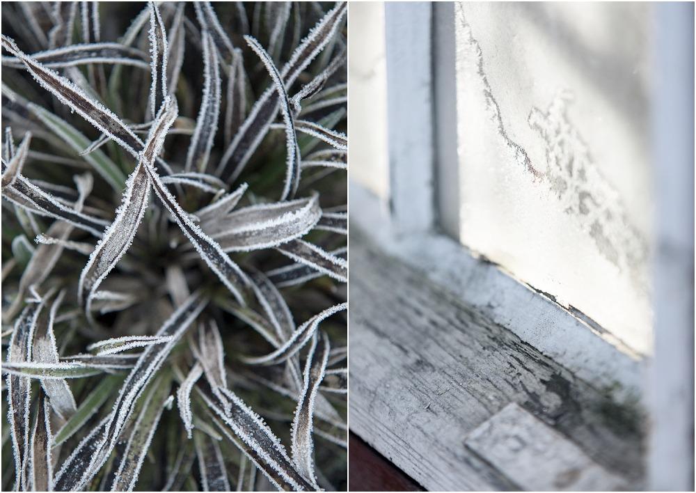 luonto, nature, outdoorphotography, suomi, finland, winter, fall, frost, Visualaddict, Frida Steiner, valokuvaaja, Kirkkonummi, maisema, kuura, huurre, ikkuna