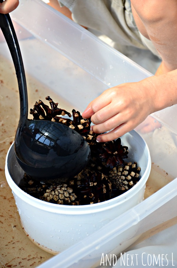 Scooping pinecones in a scented water sensory bin from And Next Comes L
