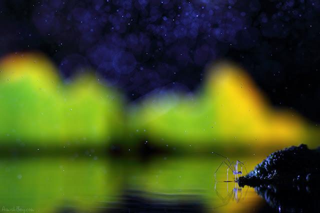 صور بعض الحشرات سبحان الله 6185779709_460c7d36f