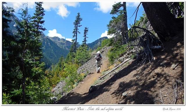 Marmot Pass: Into the sub-alpine world