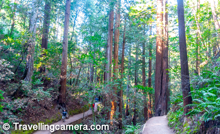 By the early 20th century, most of these forests had been cut down. Just north of the San Francisco Bay, one valley named Redwood Canyon remained uncut, mainly due to its relative inaccessibility.     Know more about history of Muir Woods National Monument, check this link.