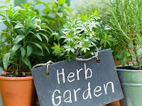 5 Cara Mendapatkan Gaya Hidup Kesehatan Terbaik Dengan Herbal