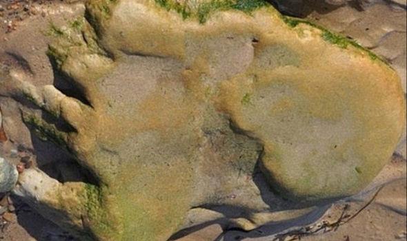 huellas de dinosaurios encontradas en Escocia
