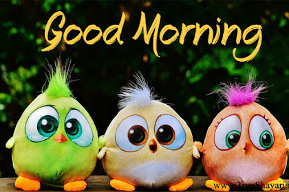 Alle Sprüche In Der Kategorie Good Morning Animated Images Free