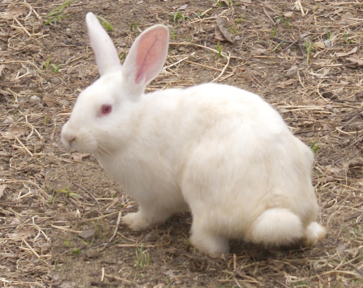 Rabbit farming in kenya, john kehoe mind power exercises, home