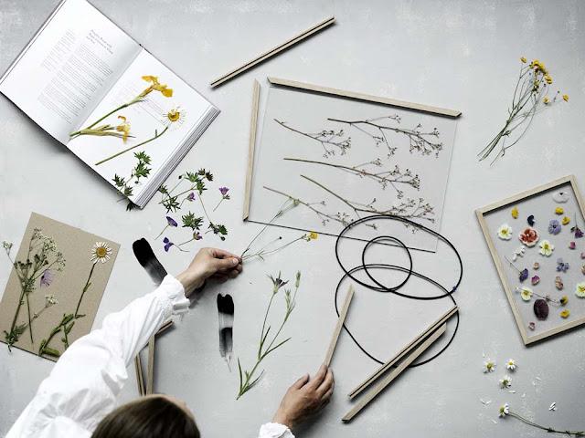 DIY herbier sous plaques de verre