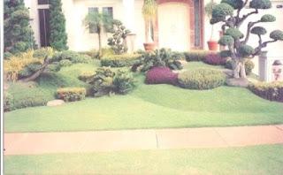 Galeri Taman - Tukang Taman Surabaya 18