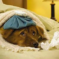 El control de temperatura es importante para la sobreviviensia del animal en casos de deshidratación