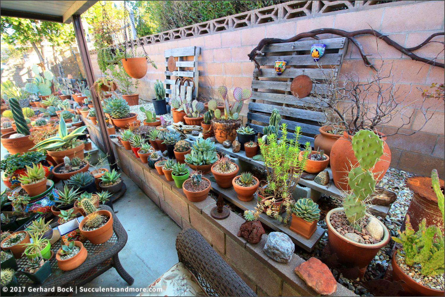 Succulents And More My Friend Luisa 39 S Inland Empire