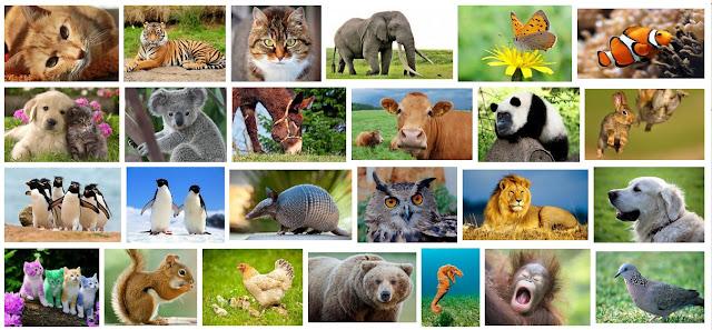 Keanekaragaman Fauna di Indonesia