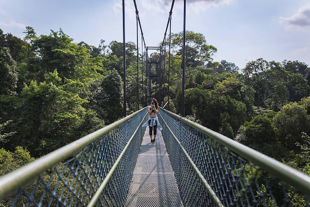walking with nature at Treetop Walk,things to do in Singapore,singapore attractions map pass express tickets package near airport for family free guide,singapore destinations wiki guide for honeymoon,singapore tourist destinations,singapore ferry destinations,singapore holiday destinations,singapore airport destinations,singapore travel guide tips advice visa advisory packages blog agency