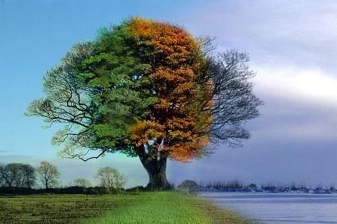 mevsimler ile ilgili görsel sonucu