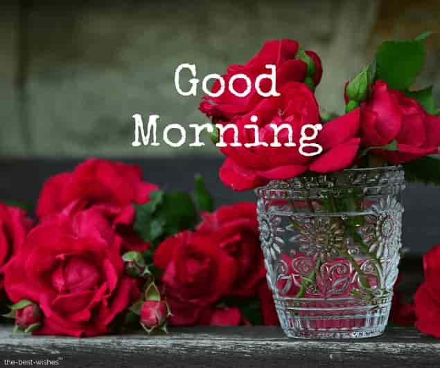 good morning wishes with red roses images