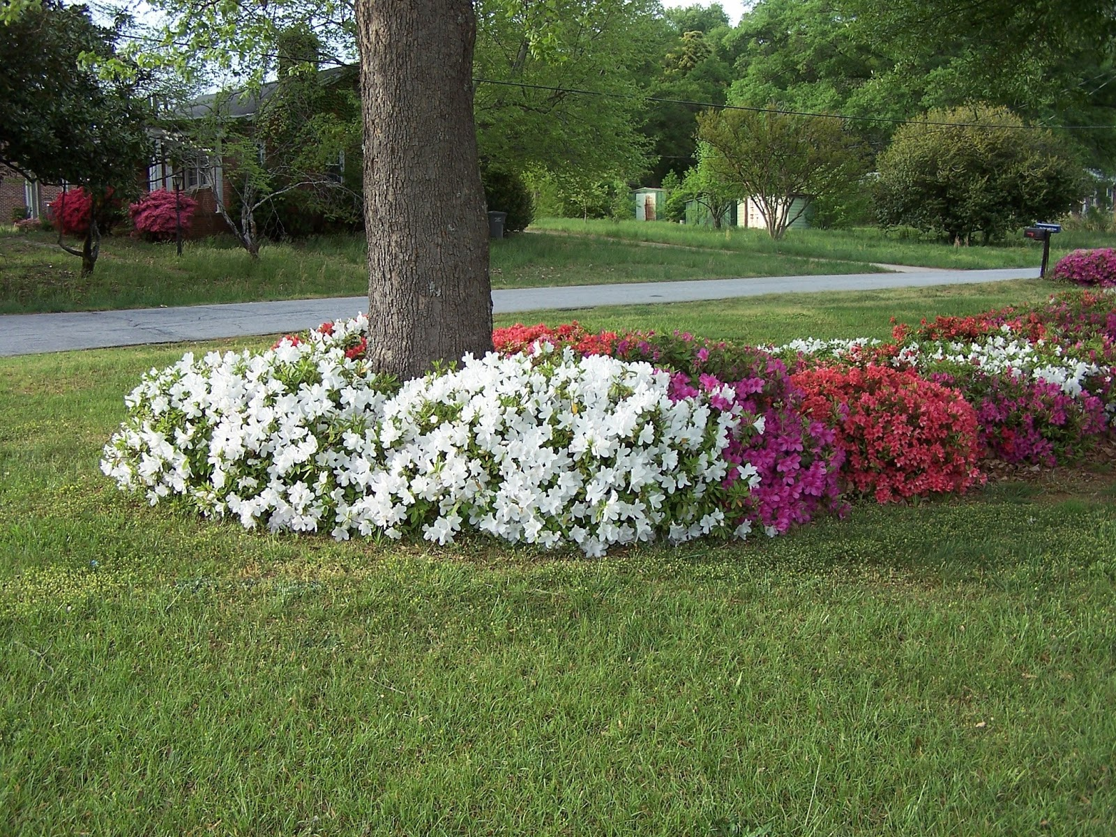 3 Landscaping: Landscaping Ideas Around Trees