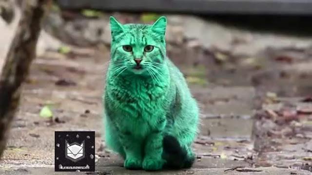 Kucing Berwarna Hijau Wujud di Bulgaria?