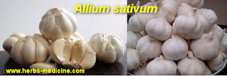 Kidney stones use Garlic