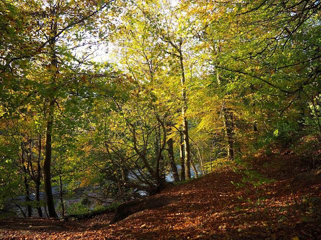 Autumn in Roslin Glen, near Edinburgh, Scotland