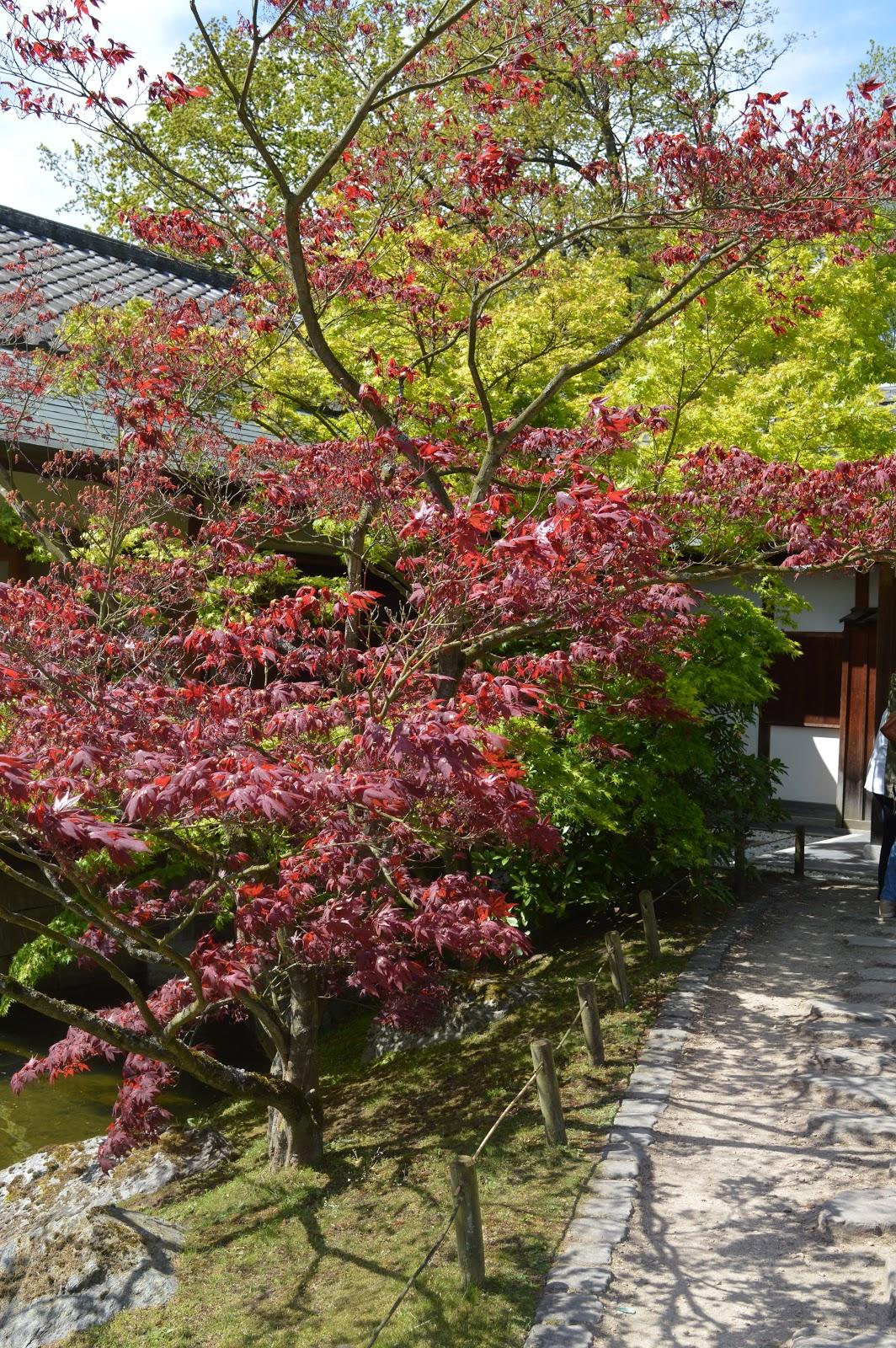 Passionn ment jardin visite du jardin japonais de hasselt for Jardin a visiter 78