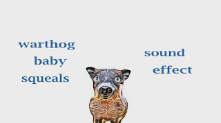 learn warthog sounds
