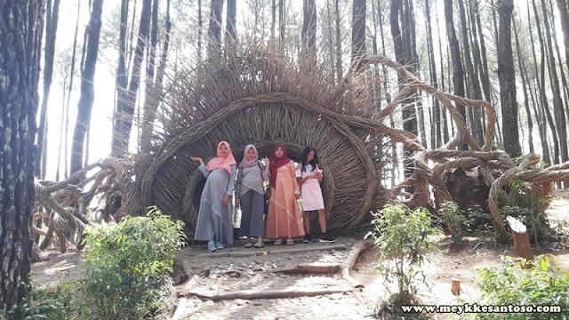 Berkunjung ke Hutan Pinus Pengger, Bantul.