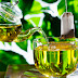 Chá verde e seus benefícios para uma vida saudável