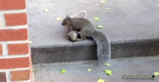 Esquilo tenta ajudar amigo morto