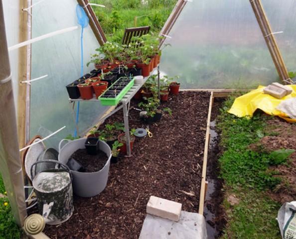 kebun sayur mini di rumah