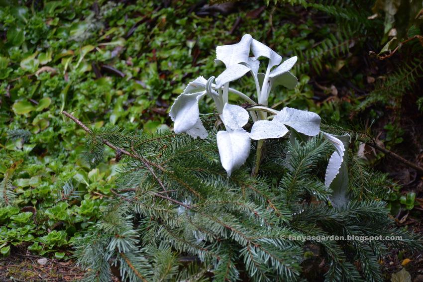 MySecretGarden: In My February Garden