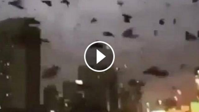 VIDEO: Pasca Pembakaran Masjid, Ribuan Burung Hitam Menyerbu Texas Amerika