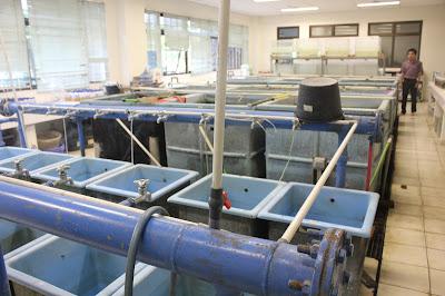 Ruang Lingkup Penyuluhan : Teknik Produksi Perikanan Yang Lebih Baik (Better Farming)