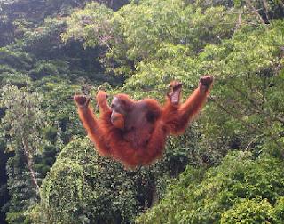 hewan langka dari sumatra