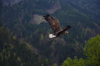 Burung terbang dengan sayap