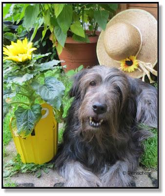 Lotte mit Sonnenblume