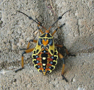 large colorful insect