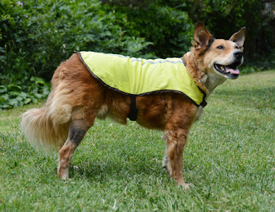 yellow reflective dog vest