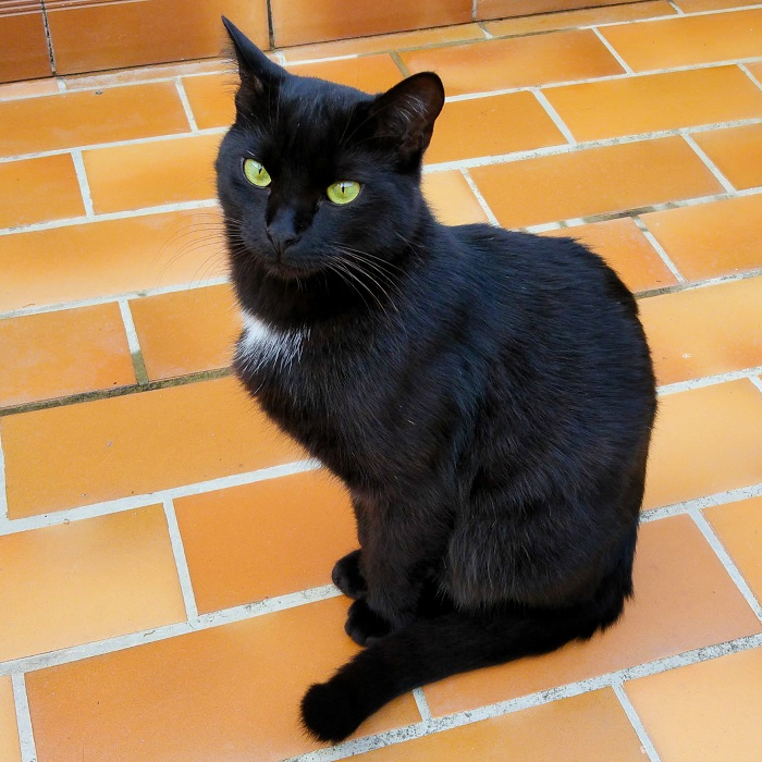 Photo de Cézanne, grand chat noir, sur la terrasse, Hello c'est Marine