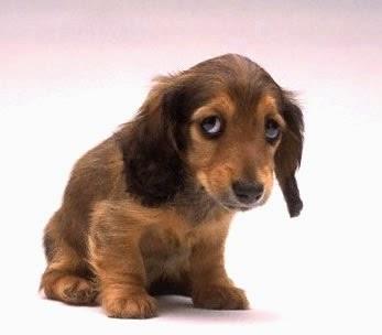 cachorro triste - Acessórios de época