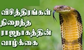 The Secrets of King Cobra