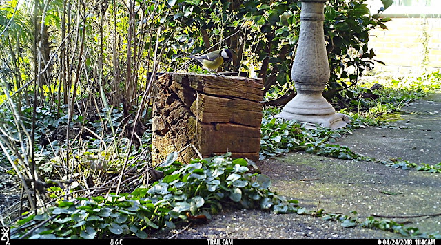 Browning Strike Force trail camera great tit