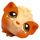 Littlest Pet Shop Portable Pets Guinea Pig (#213) Pet
